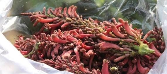 Rongabanheka or Teet phool